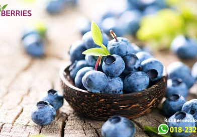 Health Benefits of 9 Berries in Rich Berries